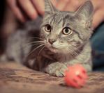 ������ Котенок Агнессы.раненый. Кошечка 003 (700x627, 530Kb)