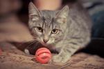 ������ Котенок Агнессы.раненый. Кошечка 002 (700x466, 380Kb)