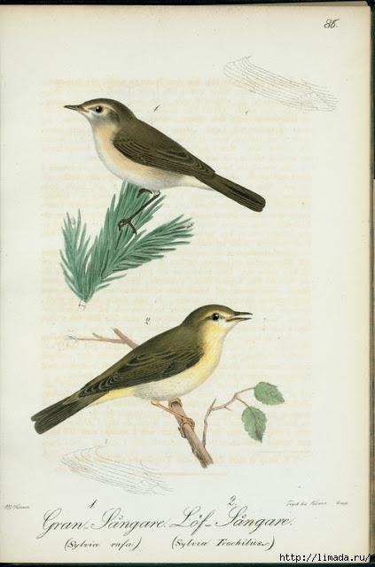 bird4 (423x640, 134Kb)