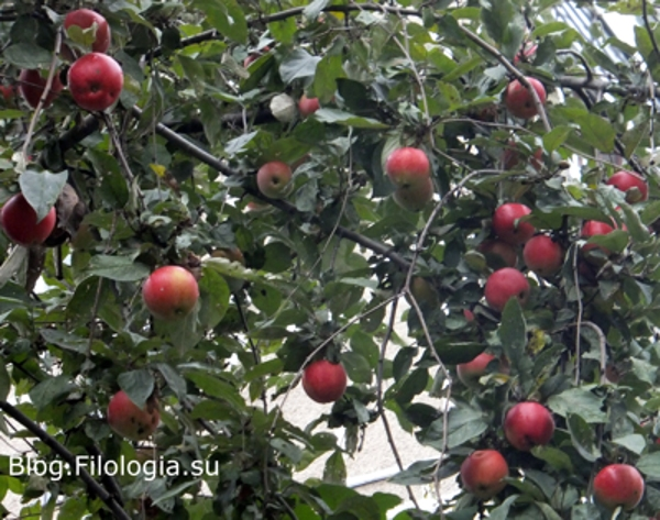 Красные яблоки на ветках/3241858_osen02 (600x473, 211Kb)