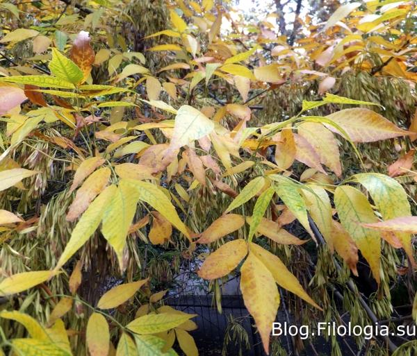 Осенняя листва на деревьях/3241858_osen04 (600x513, 292Kb)