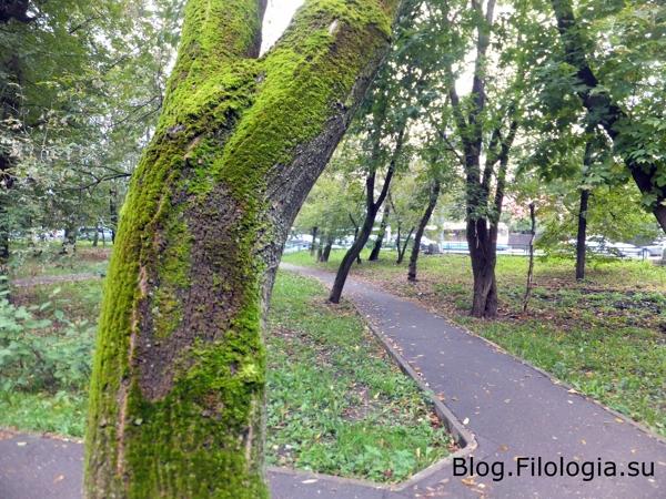 Дерево с зеленым мхом/3241858_osen09 (600x450, 273Kb)