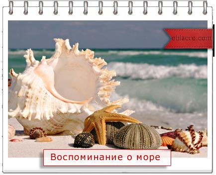 Топиарий морской из ракушек джута бусин/3518263_more (434x352, 234Kb)