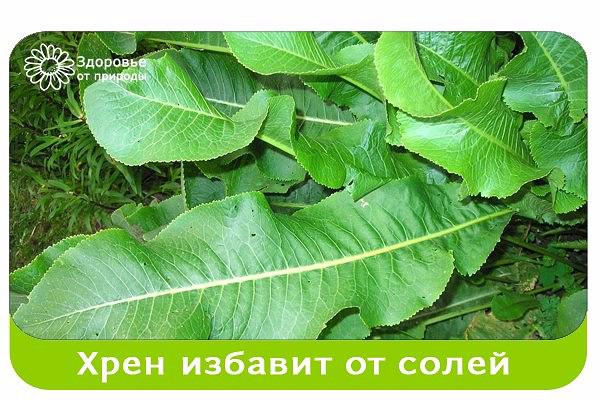 image (1) (600x400, 301Kb)