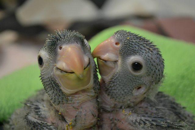 попугаи (640x427, 166Kb)