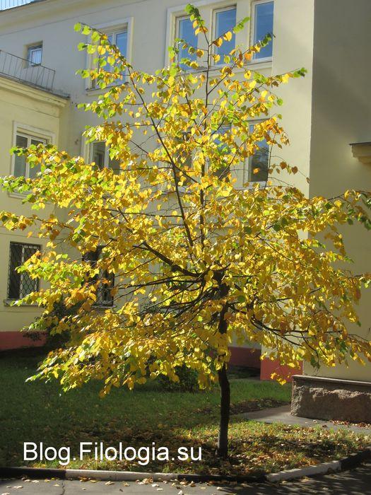 Деревце с пожелтевшими листьями. (525x700, 102Kb)