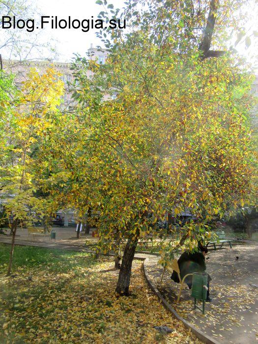 Дерево с желтыми осенними листьями и ярко красными плодами во дворе дома. А перед ним фигура женщины, сидящей на скамейке. (525x700, 121Kb)