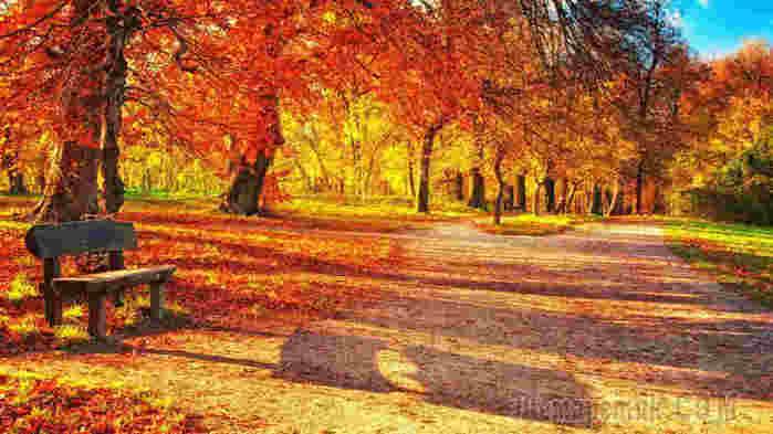 zabavnye-foto-koshek_21 (700x393, 18Kb)