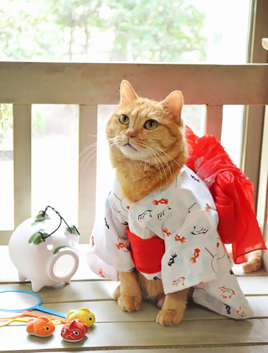 Кошки в кимоно2 (532x700, 335Kb)