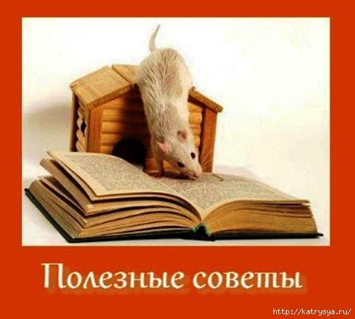 98364145_1344023208_poleznyesovety (518x465, 96Kb)