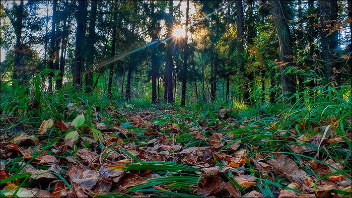 Осень в лесу/3673959_6 (700x393, 174Kb)