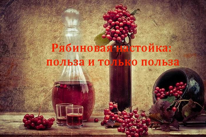 2835299_Ryabinovaya_nastoika__polza_i_tolko_polza (700x464, 215Kb)