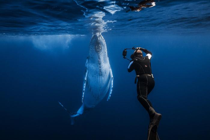 горбатые киты фото Габи Баратью 2 (700x466, 256Kb)