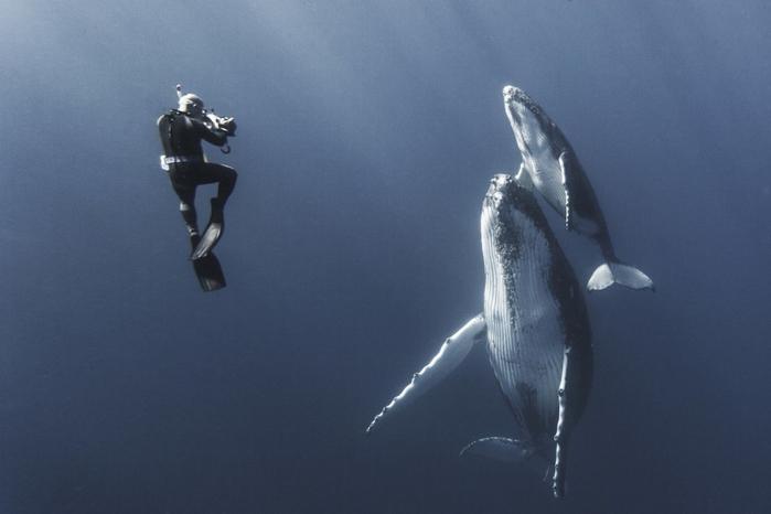 горбатые киты фото Габи Баратью 14 (700x466, 160Kb)