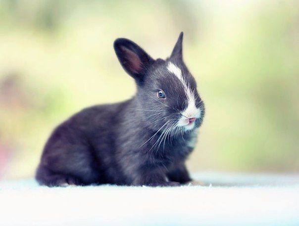 Как растет кролик8 (604x457, 128Kb)