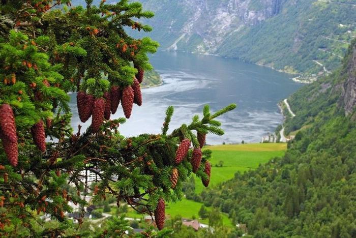 Прекрасные фьорды Норвегии (невероятные фотографии)