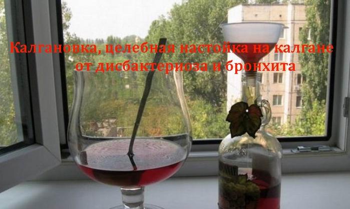 2835299_Kalganovka_celebnaya_nastoika_na_kalgane_ot_disbakterioza_i_bronhita (700x417, 193Kb)