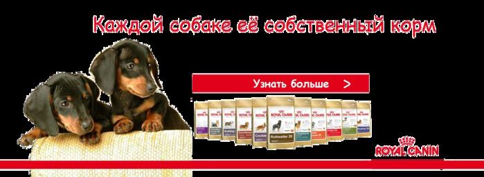 phpOpGzfn_5432ce00e04d3 (700x257, 171Kb)