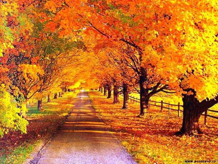 5227673_autumn_alley2 (700x525, 83Kb)