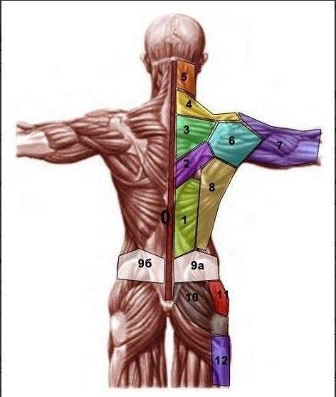 Проекция психосоматических проблем на теле (472x557, 38Kb)