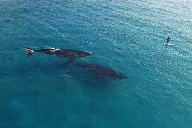 Paddle-Boarding-with-Whales-in-Esperance-Western-Australia (615x410, 37Kb)