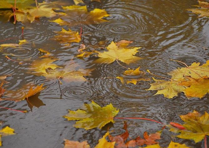 Осенний-дождь (670x476, 158Kb)