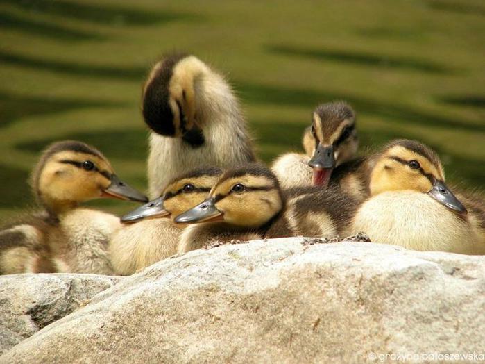 Как птицы зимой согревают друг друга (фотографии)