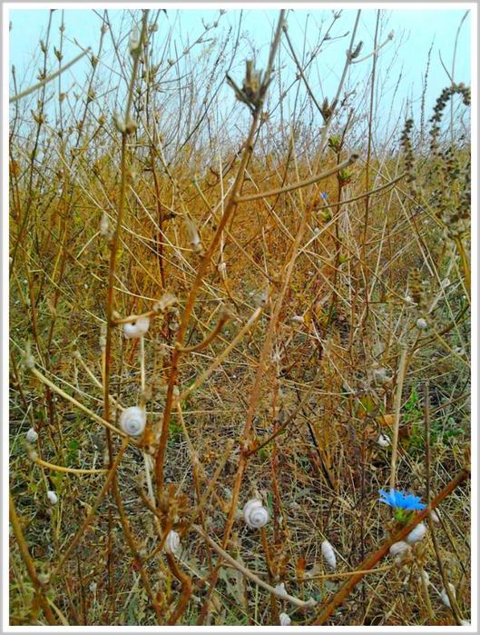 Осенняя херсонская степь (5) (529x700, 555Kb)