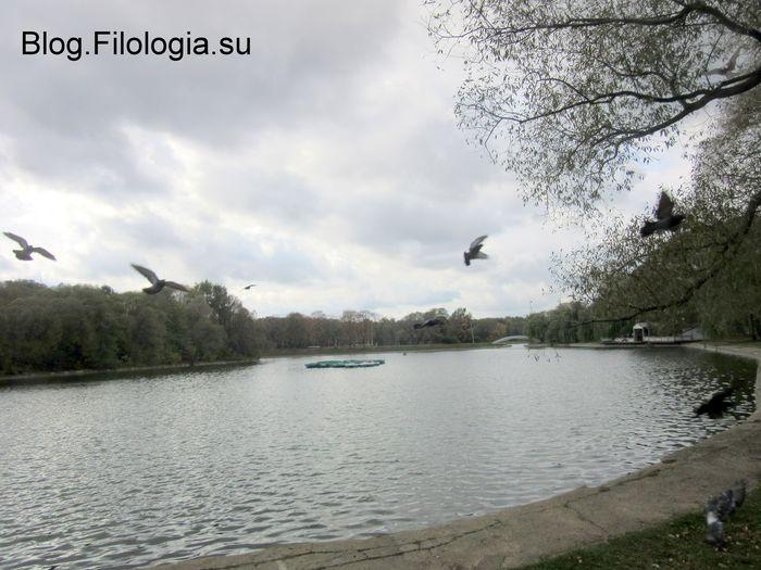 Голуби, парящие над водой в парке Дружба. (700x525, 65Kb)