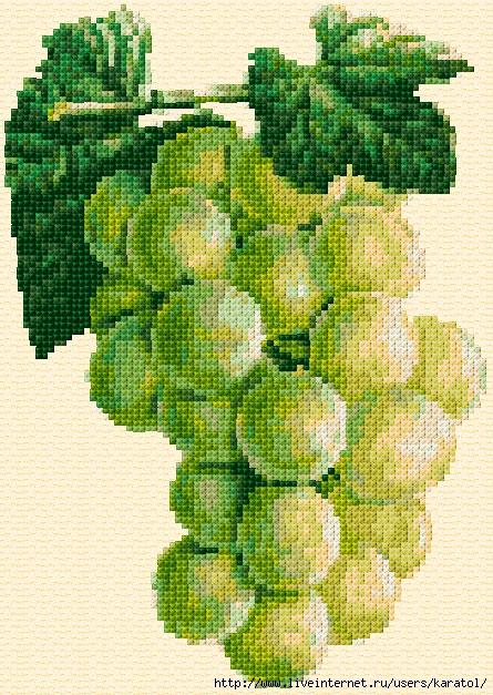 Grapes-255-O-Free-Design (445x627, 324Kb)