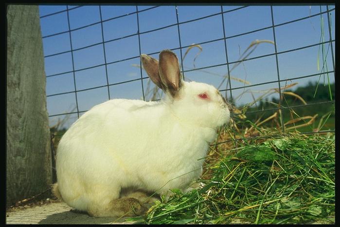 Клетки для кроликов российского производства