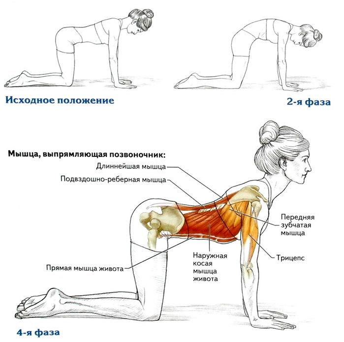 фде=Упражнения для спины: вытяжение и укрепление/2835299_Potyagivaushayasya_koshka_ (700x695, 72Kb)