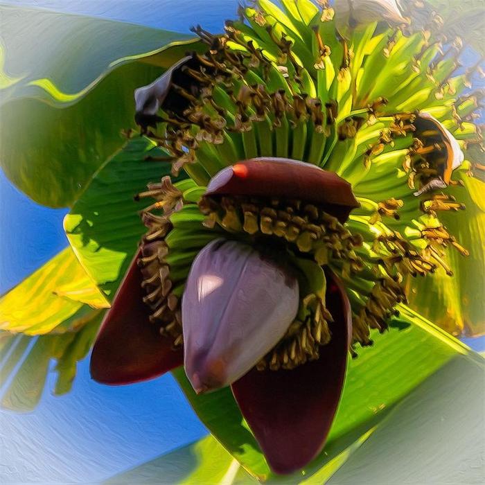 Kak-cvetut-banany (700x700, 549Kb)