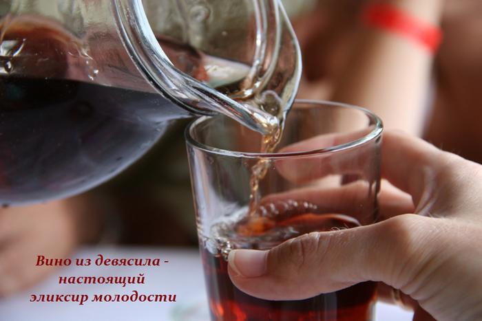 1445357423_Vino_iz_devyasila__gotovim_nastoyaschiy_yeliksir_molodosti (700x467, 450Kb)