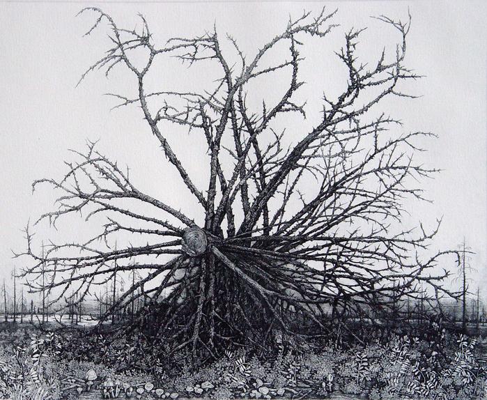 упавшее дерево 2005г. офорт 30х36 (700x574, 672Kb)