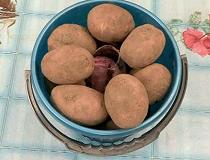 hranim_kartofel (210x160, 37Kb)
