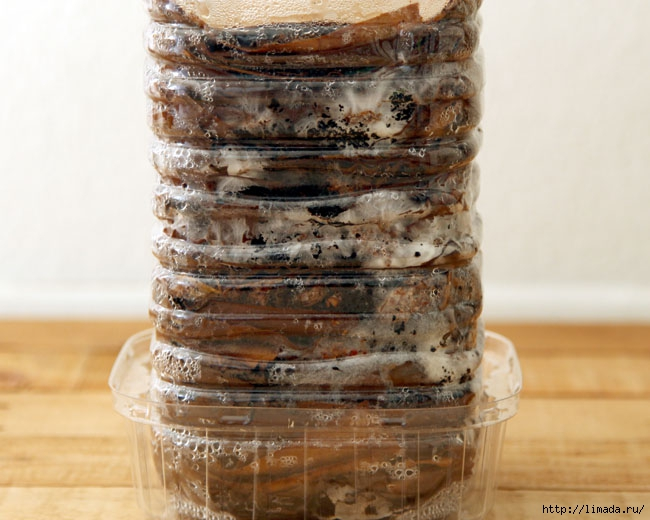 grow-mushrooms-on-coffee-grounds-apieceofrainbowblog-22 (650x520, 186Kb)