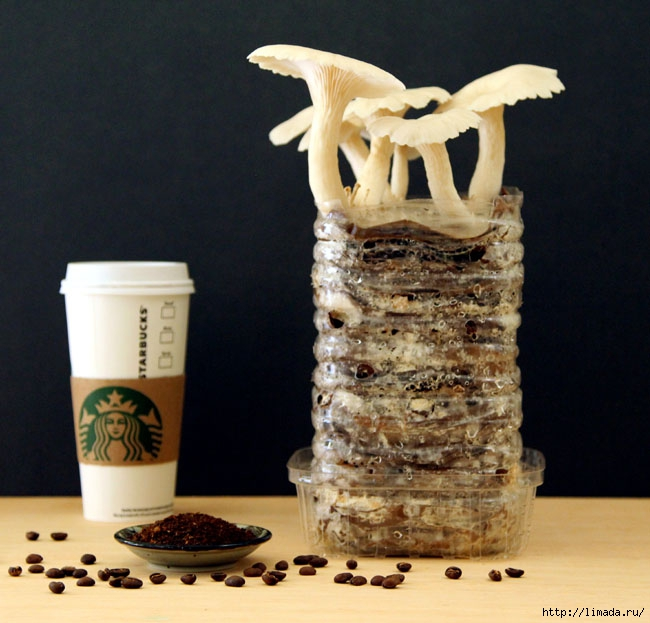grow-mushrooms-on-coffee-grounds-apieceofrainbowblog-30 (650x623, 211Kb)