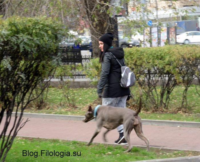 Прогулка с собакой в сквере на Красной Пресне (700x567, 82Kb)