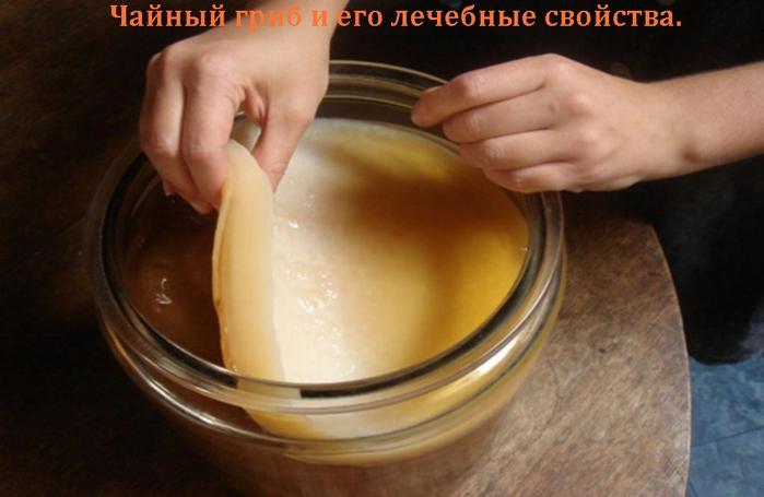 alt=Чайный гриб и его лечебные свойства./2835299_ChAINII_GRIB (700x455, 180Kb)