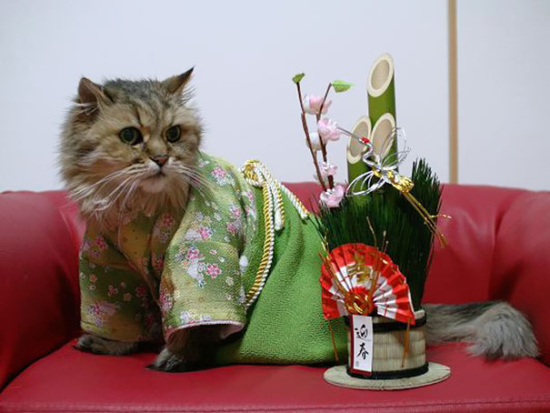 кошки в кимоно фото 2 (605x454, 167Kb)