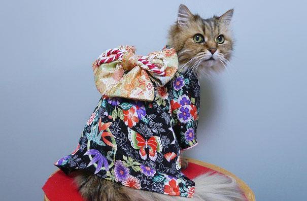 кошки в кимоно фото 4 (605x396, 154Kb)