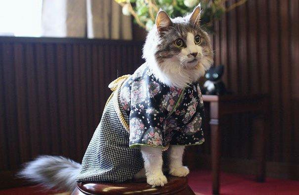 кошки в кимоно фото 6 (605x396, 187Kb)