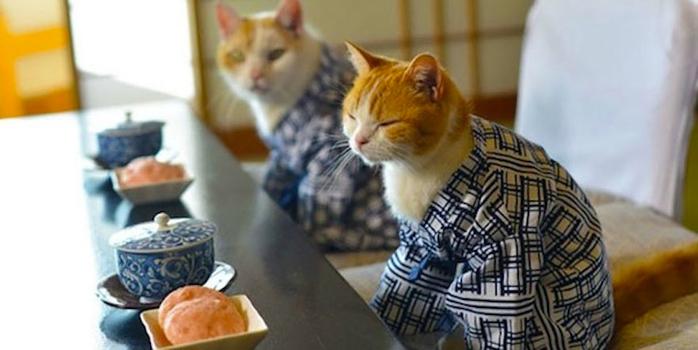 кошки в кимоно фото 8 (700x350, 222Kb)