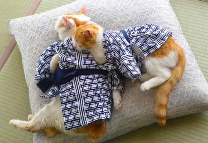 кошки в кимоно фото 12 (698x480, 306Kb)