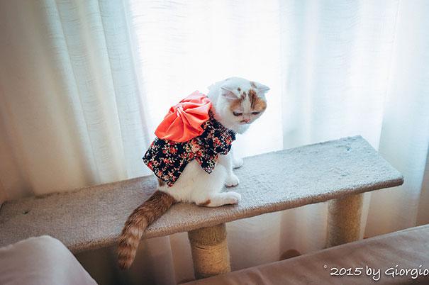кошки в кимоно фото 15 (605x402, 131Kb)