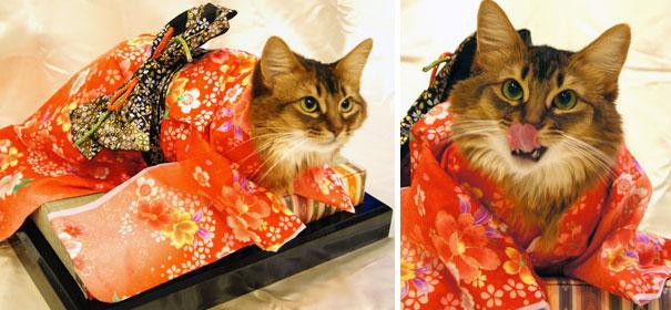 кошки в кимоно фото 16 (605x280, 187Kb)