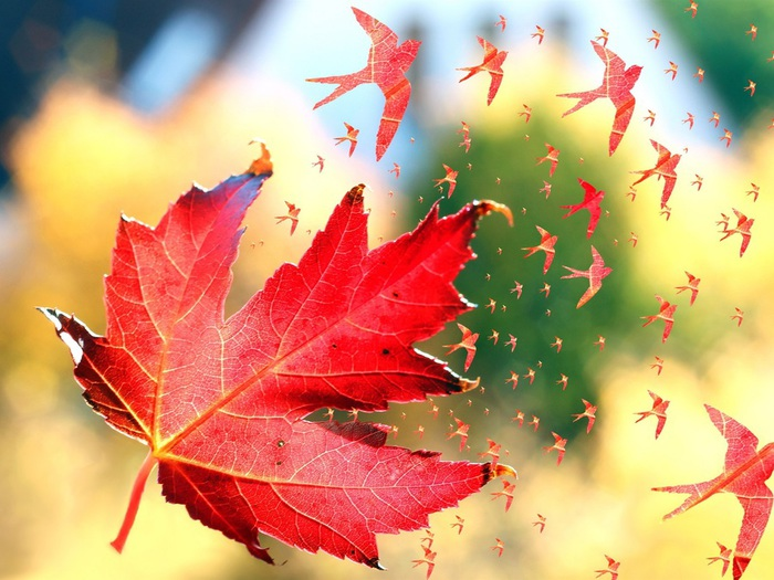 Red-maple-leaves-birds-art_1920x1440 (700x525, 129Kb)