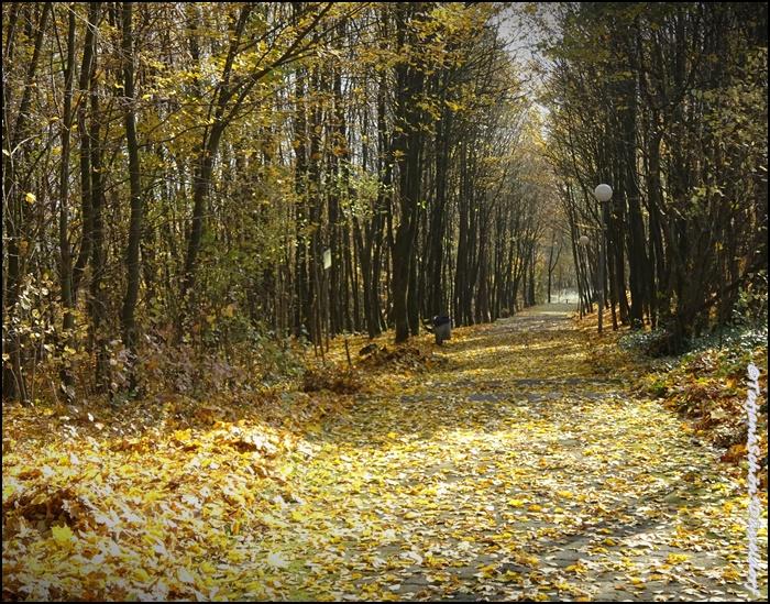 Альбом градоведа - немецкий лес в октябре 2015 года