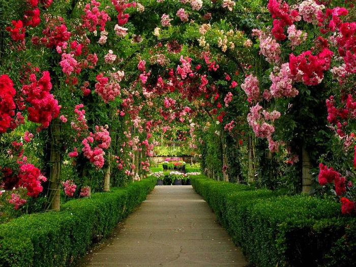 gardens-around-the-world-butchart-gardens-walkway (700x525, 579Kb)